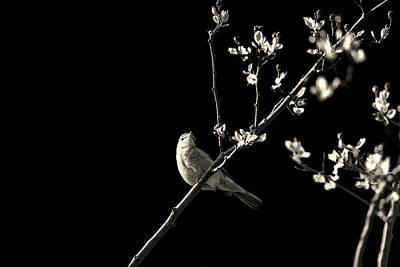 Bird Silhouette Poster by Martin Newman