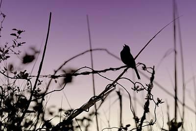 Bird Sings Poster