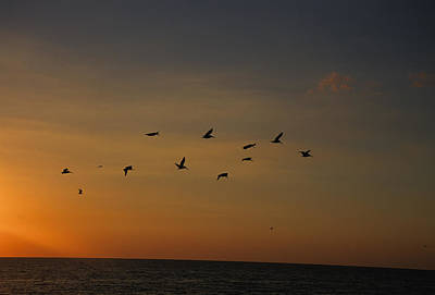 Birds Fly Into The Wind Above The Gulf Poster