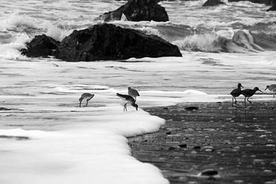 Birds In The Waves Black And White Poster