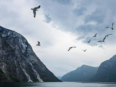 Birds Of The Fjords Of Norway Poster