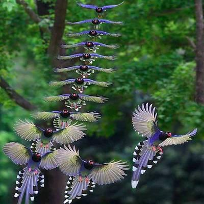 Birds On A Row Poster by Lulu Escudero