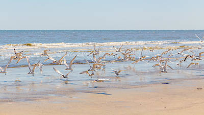 Birds On Cumberland Island 2 Poster by Gestalt Imagery