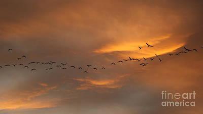Poster featuring the photograph Birds Over San Miguel De Allende by John  Kolenberg