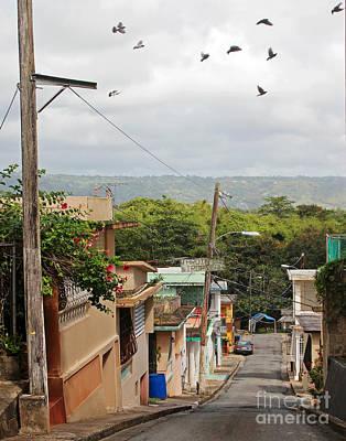 Birds Over Yabucoa Poster