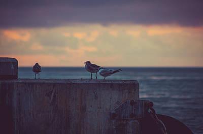 Birds Poster by Scott Meyer