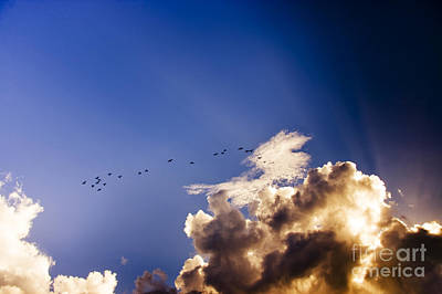Birds Soaring Sky High  Poster by Jorgo Photography - Wall Art Gallery
