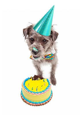 Birthday Dog Eating Cake Poster by Susan Schmitz