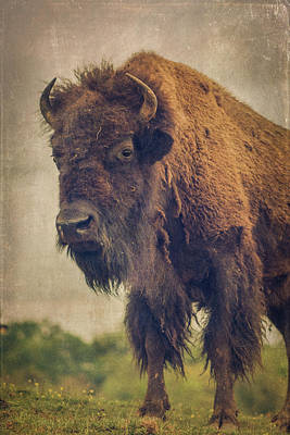 Poster featuring the photograph Bison 8 by Joye Ardyn Durham