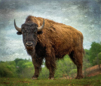 Poster featuring the photograph Bison 9 by Joye Ardyn Durham