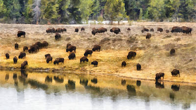 Bison At Indian Pond Poster