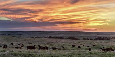 Bison At Sunrise Poster