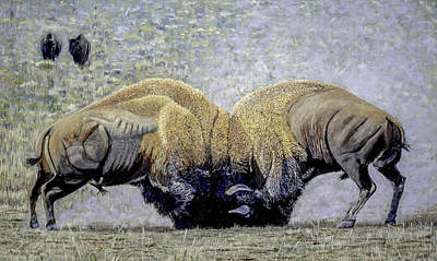 Bison Fight Original Oil Painting 60x36x1.5 Inch Poster by Manuel Lopez