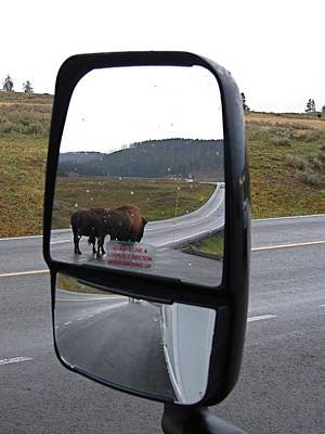 Bison In My Rear View Poster