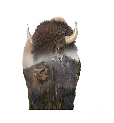 Bison Mountain  Poster