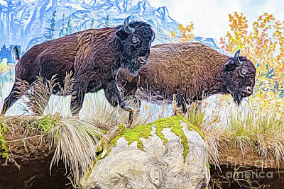 Poster featuring the digital art Bison Pair by Ray Shiu