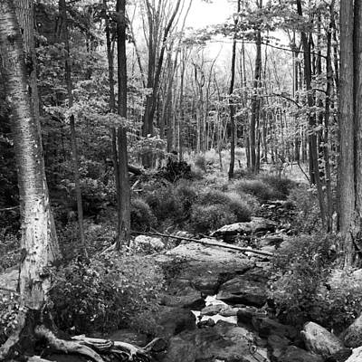 Black And White Babbling Brook Poster