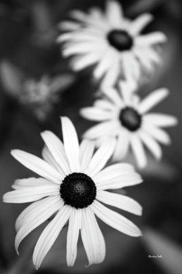 Poster featuring the photograph Black And White Daisies by Christina Rollo