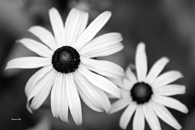 Poster featuring the photograph Black And White Daisy by Christina Rollo