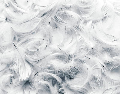 Black And White Feathers Background. Poster by Michal Bednarek