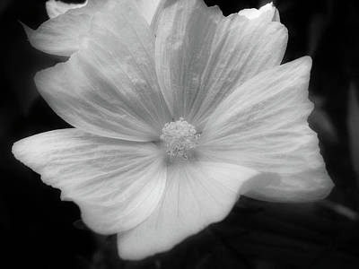 Black And White Floral Poster by Rhonda Barrett