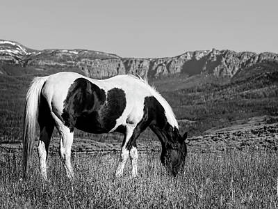 Black And White Horse Grazing In Wyoming In Black And White  Poster