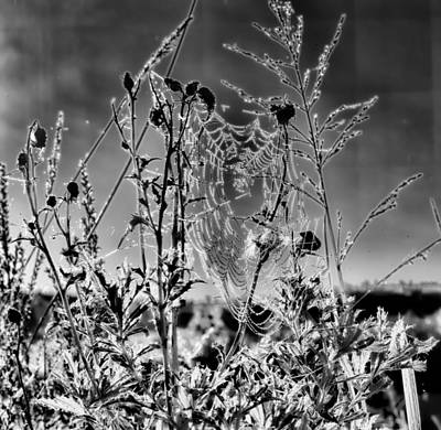 Black And White Monochrome Wet Web Db Poster