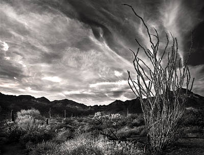 Black And White Ocotillo And Clouds Poster