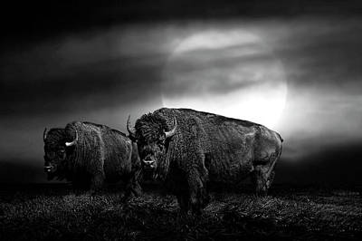 Black And White Of An American Buffalo Under A Super Moon Poster