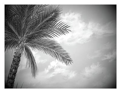 Poster featuring the digital art Black And White Palm by Darren Cannell