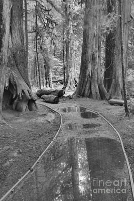 Black And White Path Through The Forest Poster by Adam Jewell