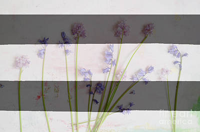 Black And White Stripes And Widlflowers Poster