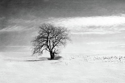 Black And White Tree In Winter Poster