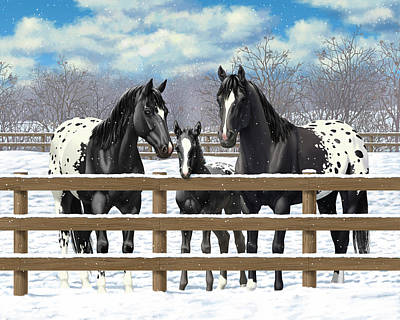 Black Appaloosa Horses In Snow Poster by Crista Forest