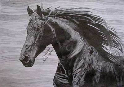 Poster featuring the drawing Black Beauty by Melita Safran
