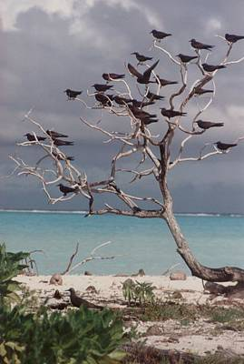 Poster featuring the photograph Black Birds by Mary-Lee Sanders