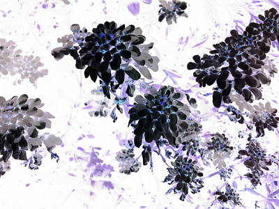 Black Blooms I Poster