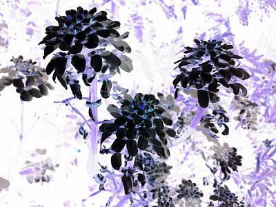 Black Blooms I I Poster
