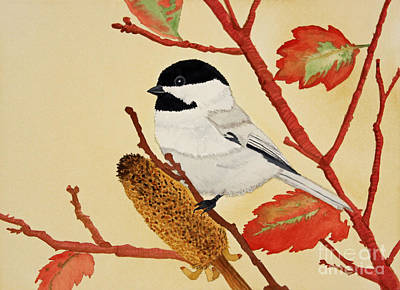 Black Capped Chickadee Poster by Norma Appleton