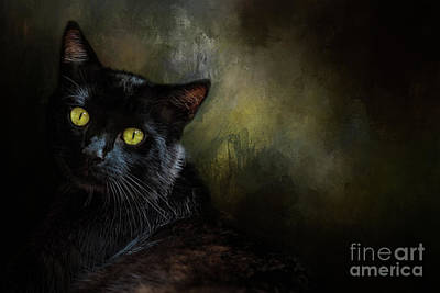 Black Cat Portrait Poster