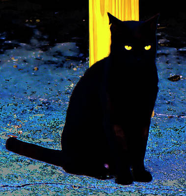 Black Cat Yellow Eyes Poster