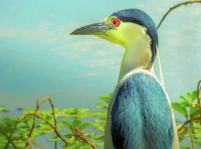 Black-crowned Night Heron Digital Art Poster