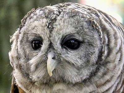 Black Eye Owl Poster