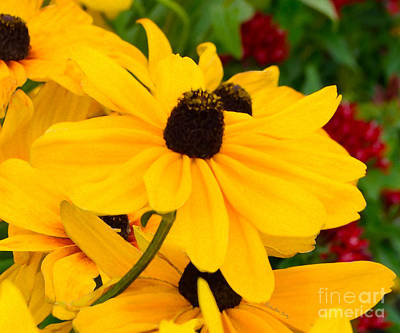 Poster featuring the digital art Black-eyed Susan Floral by Mas Art Studio