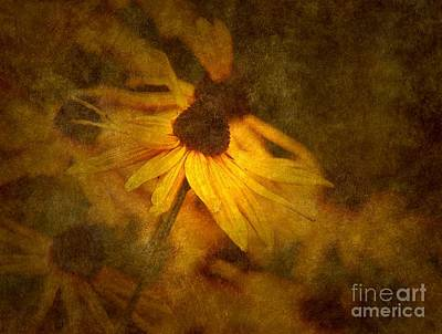 Black-eyed Susan Poster by Sharon Talson