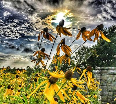 Poster featuring the photograph Black Eyed Susan by Sumoflam Photography