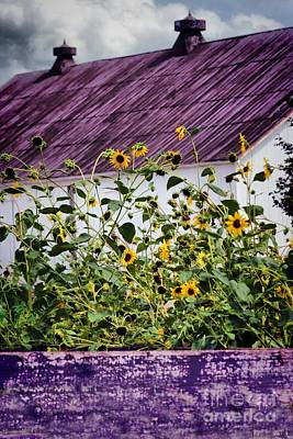 Black Eyed Susans Poster by Polly Peacock