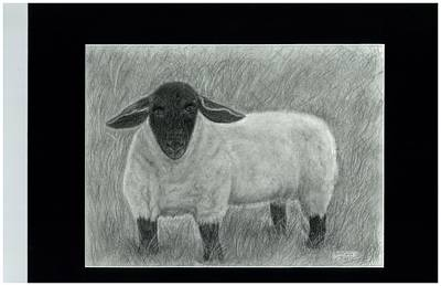 Black Face Sheep In Field Poster