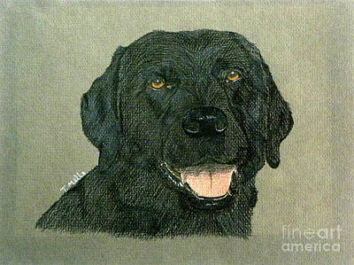 Poster featuring the drawing Black Labrador Retriever by Terri Mills
