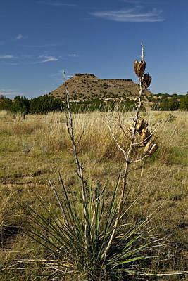 Black Mesa Cacti Poster